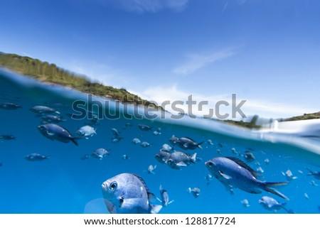 Underwater Fish/ split view between ocean, earth and sky - stock photo