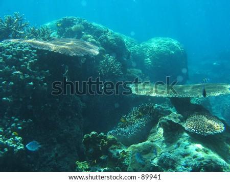 Underwater Garden - stock photo