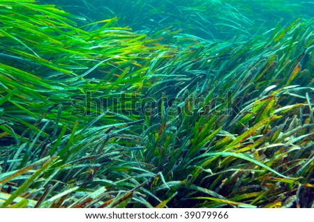 underwater image of aquatic plants and fishes - stock photo