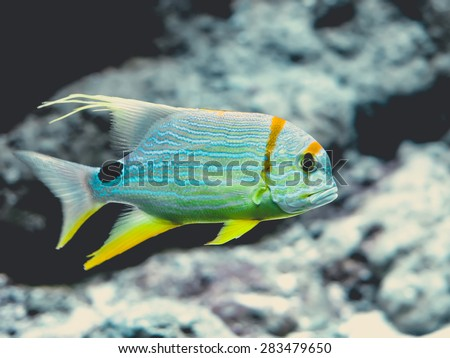 underwater image of colorful tropical fish