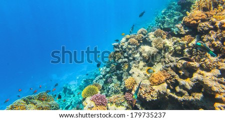 Underwater image of coral reef