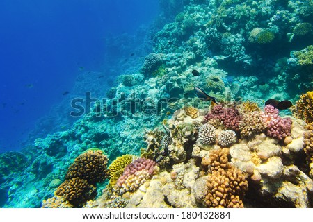 Underwater image of coral reef - stock photo