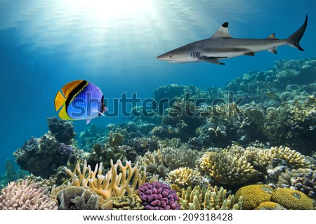Underwater image of coral reef with shark - stock photo