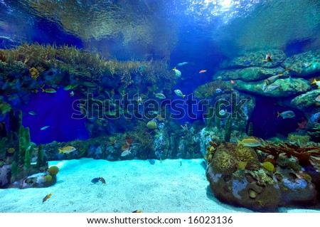 underwater image of reef and fishes - stock photo