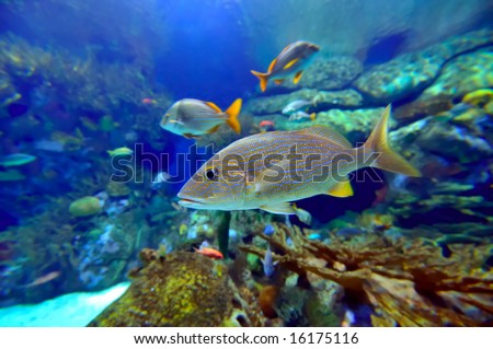 underwater image of reef and fishes