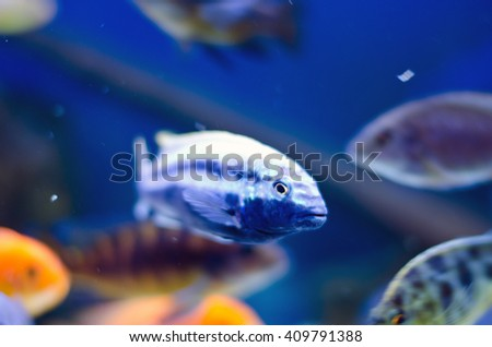 underwater in an aquarium for small fish - stock photo