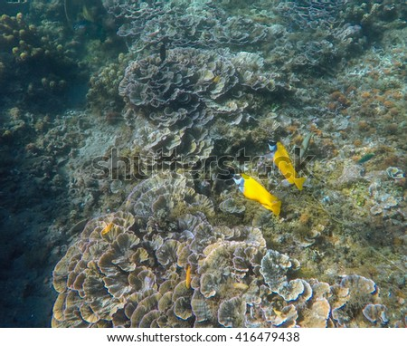 Underwater landscape, couple of yellow fishes, tropical fish in sea, ocean background, beauty couple of fish in sea, Yellow fishes and coral reef, sea  life and animals, beautiful sea landscape - stock photo