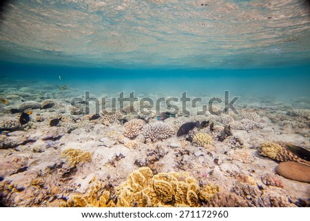 Underwater landscape. Egypt, Sharm, Red sea coral reef and fish. Primiraly scarus fishes - stock photo