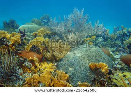 underwater landscape in an healthy coral reef of the Caribbean sea
