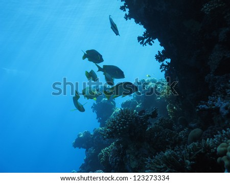 Underwater landscape in the Red Sea - stock photo