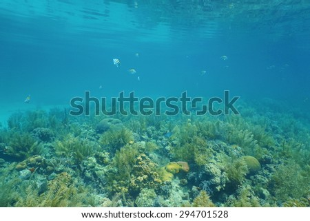 Underwater landscape on a shallow coral reef with calm water surface in the Caribbean sea - stock photo