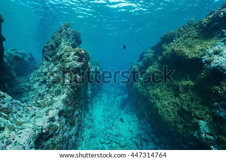 Underwater landscape on the outer reef carved by the swell, Huahine island, Pacific ocean, French Polynesia