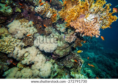 Underwater landscape. Red sea coral reef and sea goldies, soft corals and rocks - stock photo
