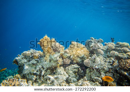 Underwater landscape. Red sea coral reef. Clean morning water. Sunlight through surface - stock photo