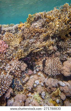 Underwater landscape. Red sea coral reef. Different corals in coral wall - stock photo