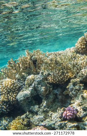 Underwater landscape. Red sea coral reef. Moring clean water, reflection surface - stock photo