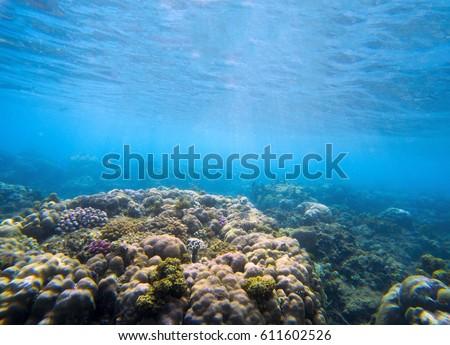 Underwater Landscape Coral Reef Tropical Seashore Stock Photo ...