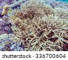 Underwater Landscape with Hundreds of Fishes near Tropical Coral Reef, Bali, Indonesia - stock photo