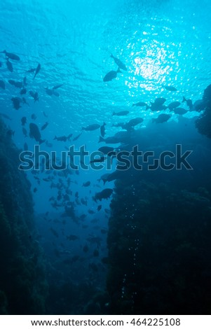 Underwater Landscape with  Hundreds of Fishes near Tropical Coral Reef, Bali, Indonesia