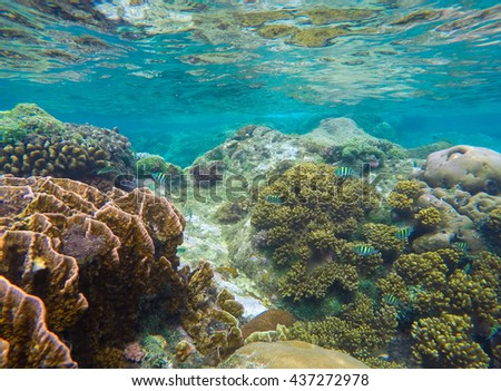 Underwater landscape with round coral and stone in yellow and brown color palette. Turquoise sea water and sea life view. Sea plants and fishes ecosystem of pure nature. Snorkeling photo, Philippines - stock photo