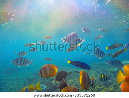Underwater landscape with tropical fish and sunlight. Sun and blue water with oceanic life. Coral reef ecosystem. Colorful aquarium fishes. Dascillus, butterflyfish, parrotfish swimming in sea water