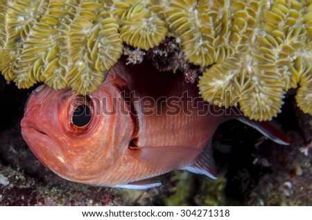 Underwater Life - stock photo