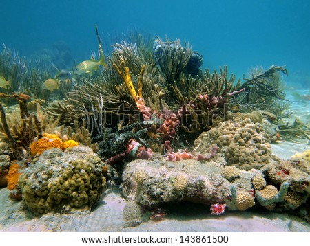 Underwater life on Caribbean seabed with sea sponges and corals - stock photo