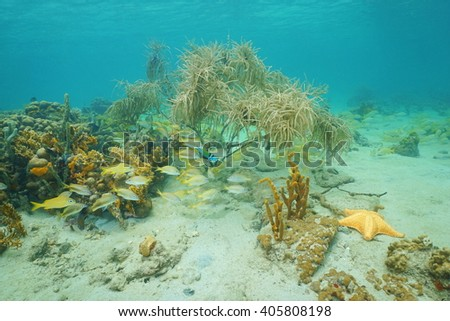 Underwater marine life composed by corals, reef fish, sponges and a starfish on a shallow seabed of the Caribbean sea - stock photo