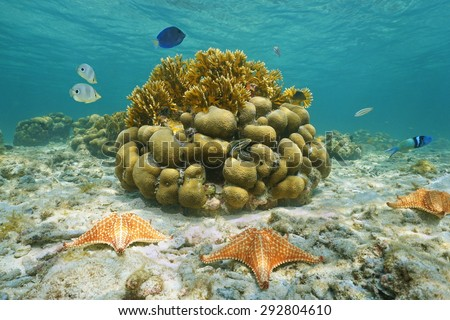 Underwater marine life on a shallow seabed with starfish, reef fish and corals, Caribbean sea, Mexico - stock photo