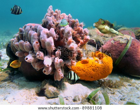 Underwater marine life with colorful sea sponges and tropical fish in the Caribbean sea - stock photo