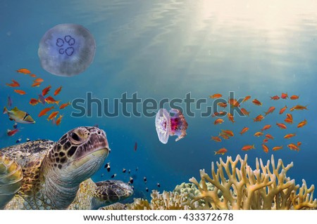 Underwater marine wildlife postcard. A turtle sitting at corals under water surface. Closeup image from Chang island in Thailand - stock photo