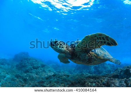 Underwater marine wildlife postcard. A turtle swimming under water surface. Closeup image from Maui island in Hawaii - stock photo