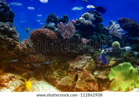 Underwater ocean background reef scene - stock photo