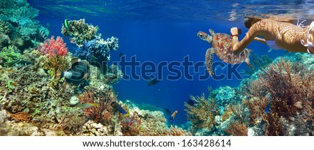 Underwater panorama in a coral reef with colorful sealife. - stock photo