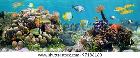 Underwater panorama in a shallow coral reef with colorful tropical fish and marine life - stock photo