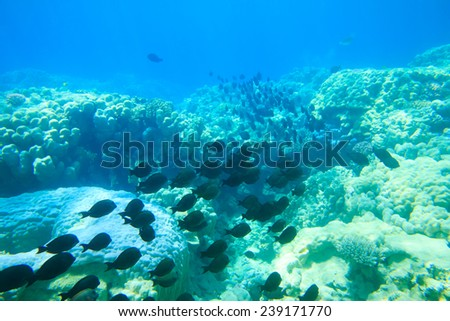 Underwater panorama with fish and coral - stock photo