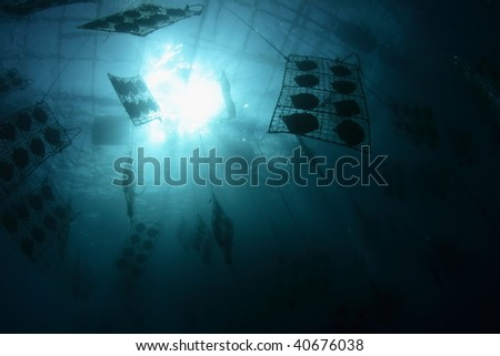 underwater pearl clam farm - stock photo