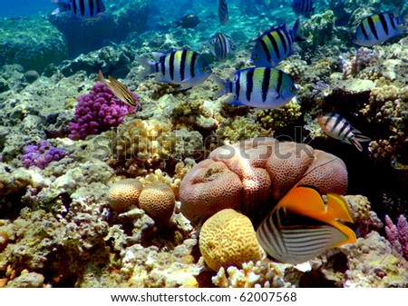 Underwater photo of a hard-coral reef,Red Sea, Egypt - stock photo