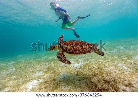 Underwater photo of boy snorkeling and swimming with Hawksbill sea turtle - stock photo