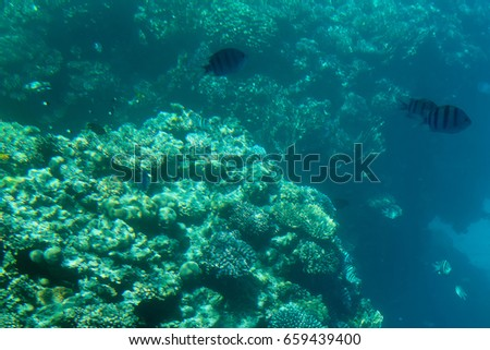 Underwater photo with coral reef and tropical fishes. Blue sea view with marine fauna.