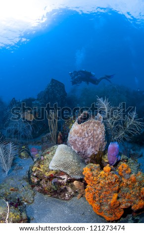 Underwater Photographer in St Lucia shooting on a coral reef - stock photo