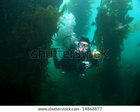 Underwater Photographer swimming through the Kelp in Catalina - stock photo