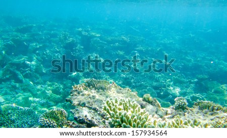 Underwater photography benthos - stock photo