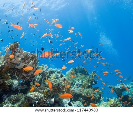 Underwater photography, fish