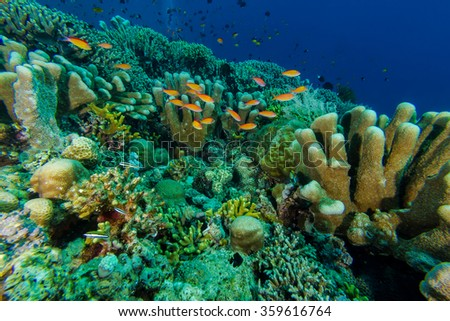 Underwater picture of  Coral Reef