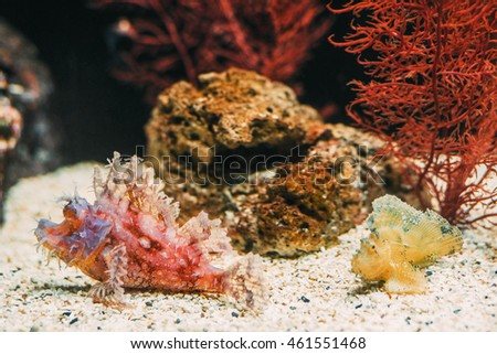 Underwater picture of strange odd tropical Fish and a coral reef. Sealife wallpaper.
