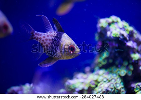 Underwater picture with great variety of fish  - stock photo