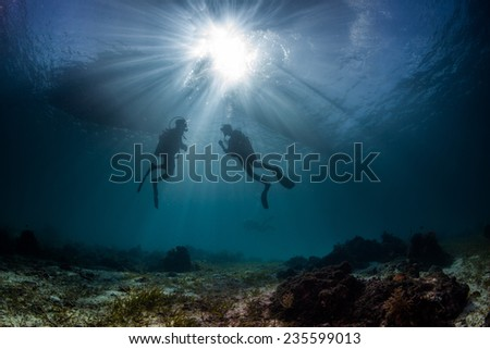 underwater reef scapes with divers and marin elife