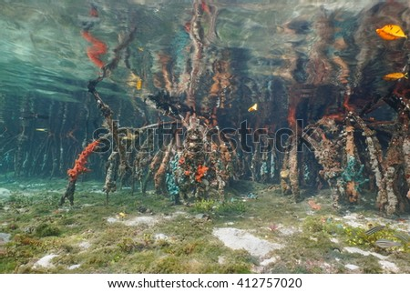Underwater roots of mangrove tree partially covered by marine life, Caribbean sea, Panama, Central America - stock photo