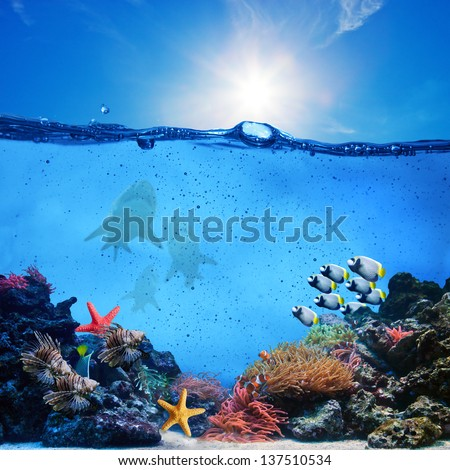 Underwater scene. Coral reef, colorful fish groups, sharks and sunny sky shining through clean ocean water. High res - stock photo